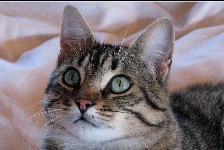 photo photo chat de gouttière