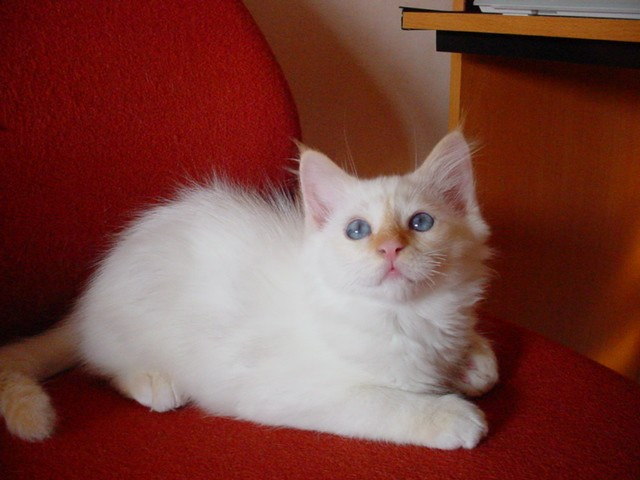 photo photo chaton 2 mois