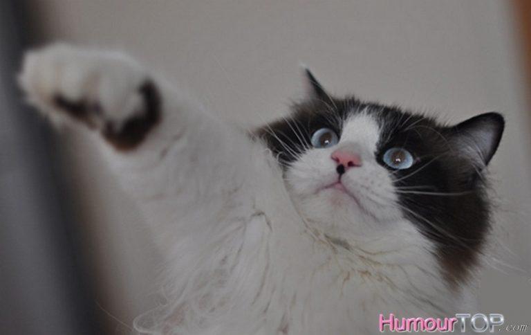 photo photo chat affreux