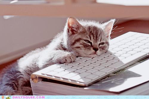photo photo chat fatigué
