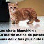 chat munchkin