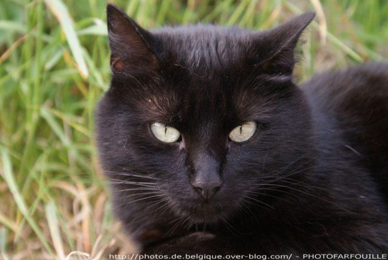 photo photo chat noir
