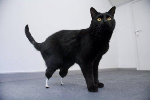 photo photo chat patte cassée