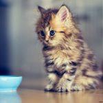 chaton 1 mois