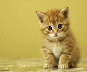 chaton 6 mois