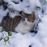 chat hiver