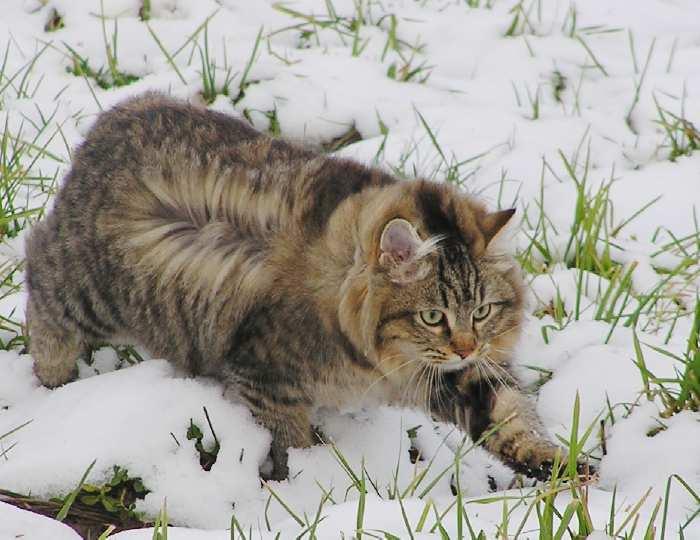 photo chat sibérien