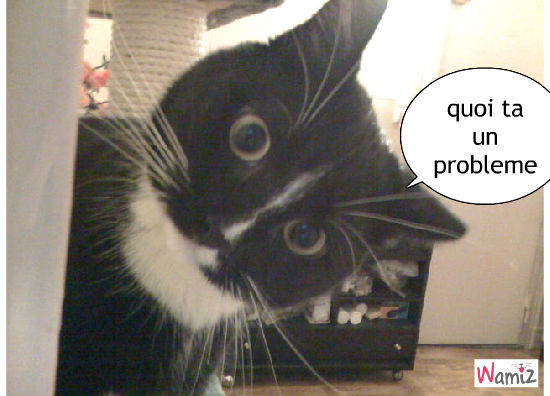 photo photo chat énervé