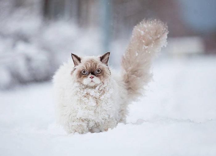 photo photo chat neige