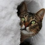 chat neige