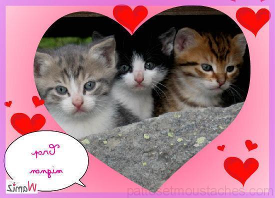 photo photo a imprimer de chat