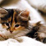 a imprimer de chaton