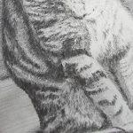 chat a dessiner