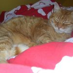 Chat gouttière roux
