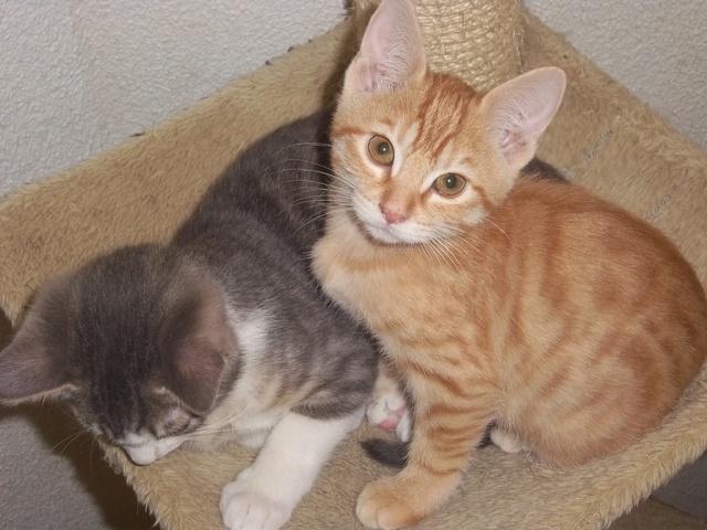 photo chat gouttière roux