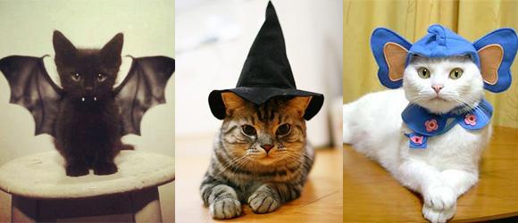 photo photo chat halloween