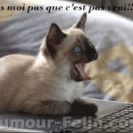 chat humour