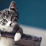 chat magnifique