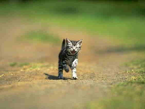 photo photo chat qui miaule
