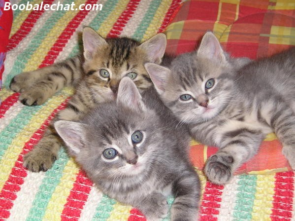 photo photo chaton 5 semaines