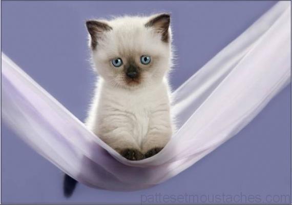 photo photo a imprimer de chaton