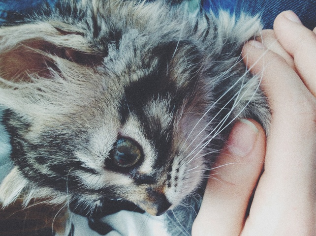 photo photo chat gouttiere