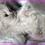 chaton 5 semaines
