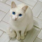 yeux chat noir