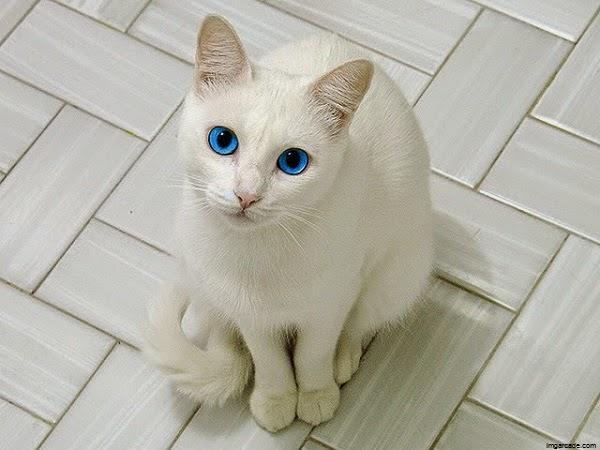 photo photo yeux chat noir