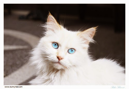 photo photo yeux chat
