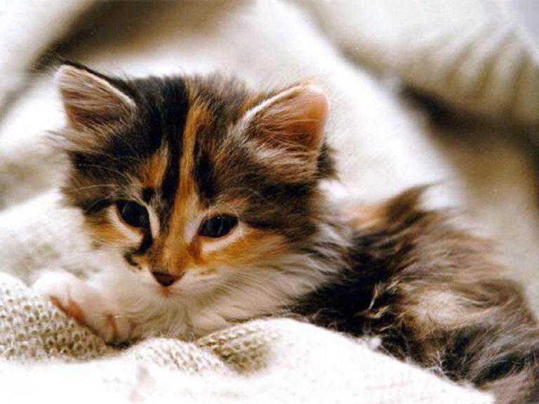 photo photo chat et chaton