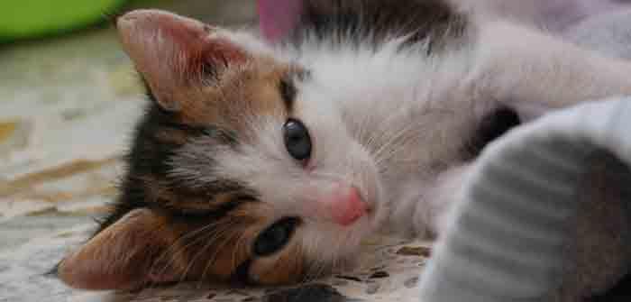 photo photo chat femelle