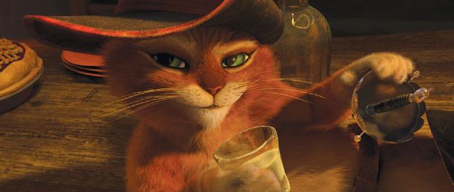 photo photo chat potté