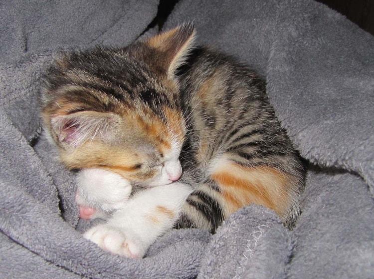 photo photo chat qui dort