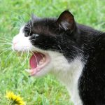 chat qui fait peur