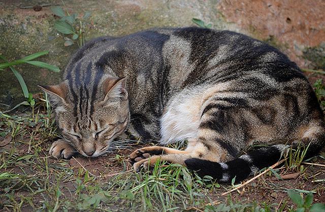 photo chat sokoké