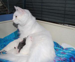 chaton 1 jour