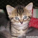 chaton 3 semaines