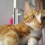 chaton 4 mois