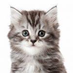 chaton 8 mois