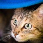chat femelle