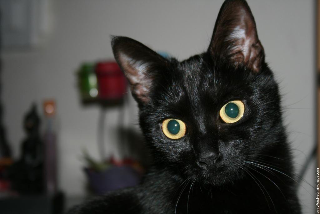 Chat Qui Fait Peur photo chat qui fait peur #2