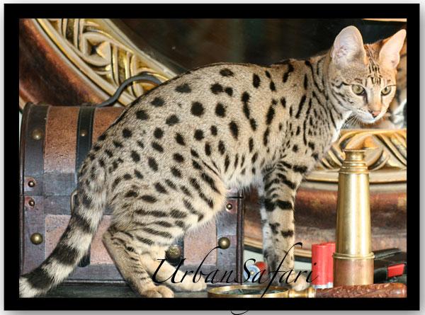 photo chat safari