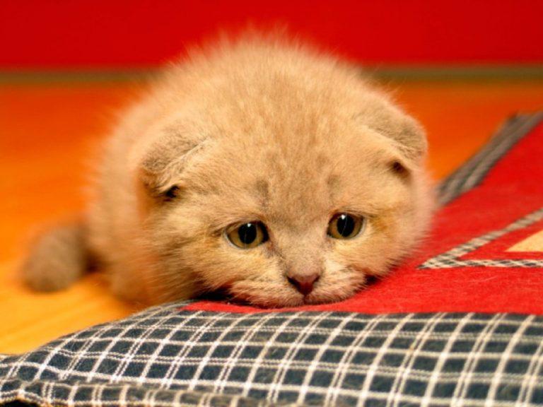 photo photo chat triste