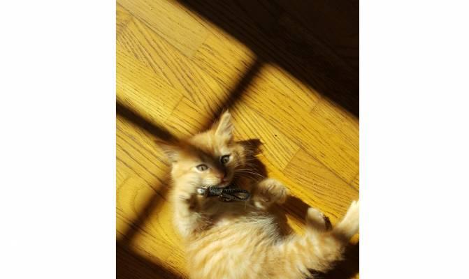 photo photo chaton 5 mois