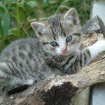 chat et chaton