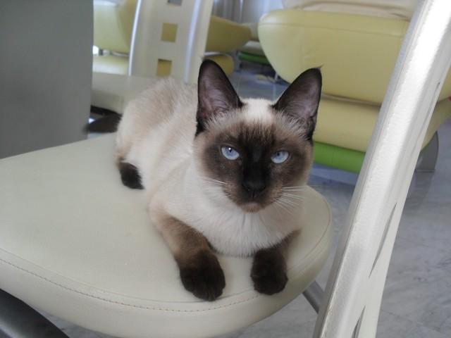 photo chat thaï
