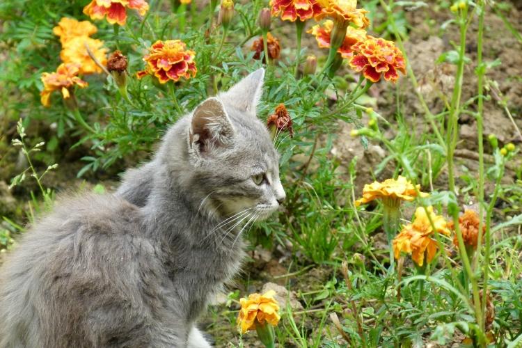 photo chat gouttière gris