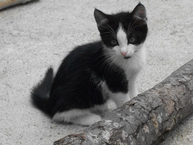 photo chat gouttière noir et blanc